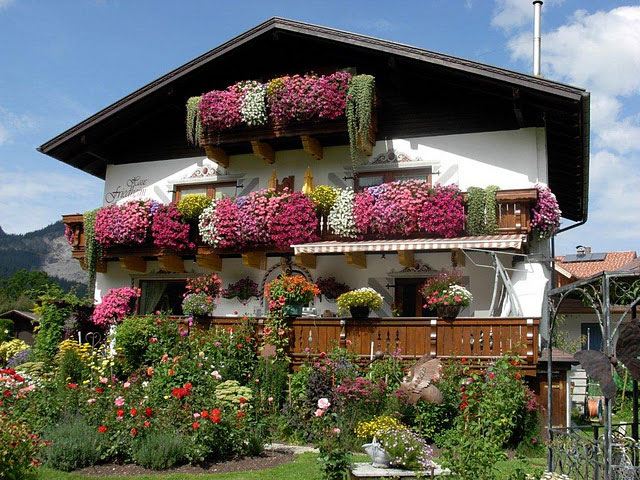 Gartnerei Allgau Startseite Beet U Balkonblumen